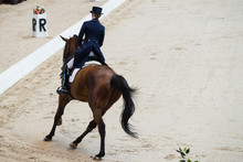 Dressage Of Horses. Rider Back