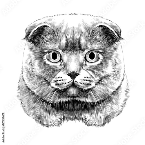 Poster Croquis dessinés à la main des animaux cat breed British lop-eared head thick symmetrical sketch vector graphics black and white drawing