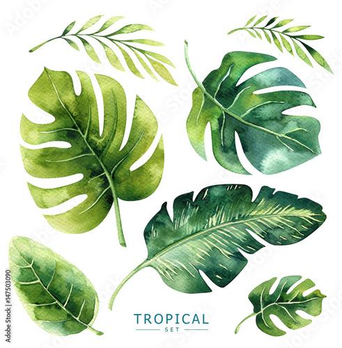 Ręcznie rysowane akwarela tropikalnych roślin zestaw. Egzotyczne liście palmowe, drzewo dżungli, elementy borany tropiku brazylijskiego. Idealny do projektowania tkanin. Kolekcja Aloha.