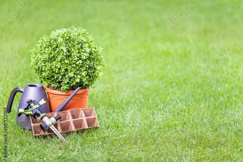 Poster Jardin gardening tools and tree in a pot on a grass in the garden with empty copy space for your text. outdoor summer hobby, topiary art, horticulture, garden service and design concept