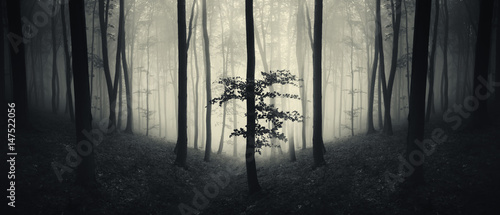 Garden Poster Forest dark surreal forest panorama