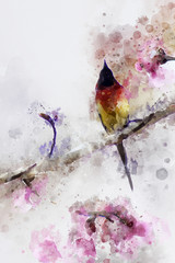 Obraz na Szkle Zwierzęta Abstract Gould's Sunbird on cherry branch