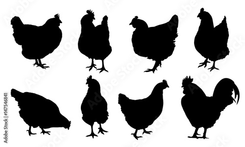 Canvas Set of realistic vector silhouettes of hens, chickens and cock isolated on white