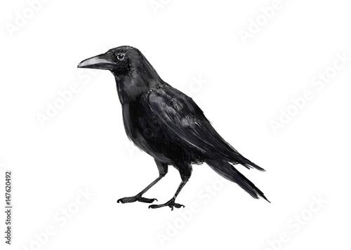 Canvas Print Illustration crows. Digital painting.
