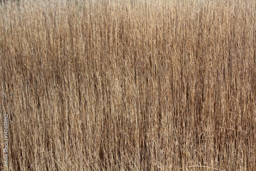 Fotografie, Obraz  Rod. Sedge. Natural background.