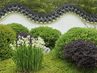 FototapetaIris in a Chinese walled garden