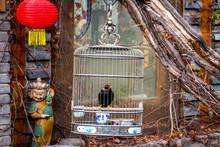 Un Mainate Dans Sa Cage à L'entrée D'une Maison Chinoise