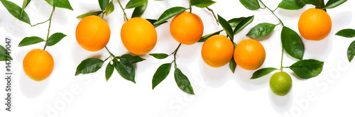Poster Fruit Branches with oranges.