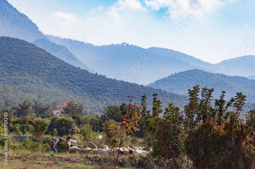 Cyprus Rural Scene Fototapet