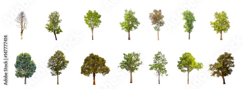 collections tree isolated. tree isolated on white background.