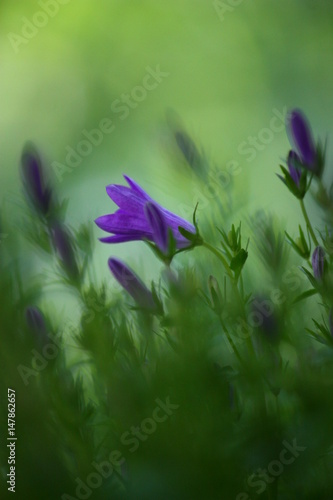 Piccoli Fiori Viola Buy This Stock Photo And Explore