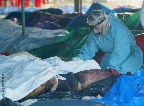 Doctor checks body in Khabi province south of Bangkok  - Buy