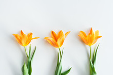 Top View Of Yellow Tulips In Row Isolated On White, Wedding Flowers Background Concept