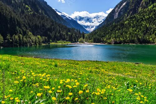 Recess Fitting Khaki Mountain lake with bright yellow flowers in foreground. Stillup lake, Austria, Tirol
