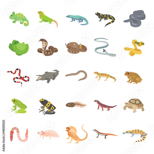 Fotografia, Obraz  25 Reptiles & Amphibians color vector icons
