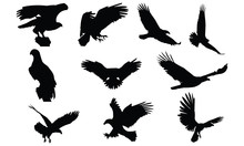 Bald Eagle Silhouette Vector I...