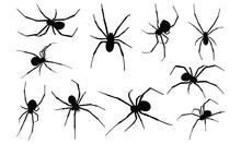 Black Widow Spider Silhouette...
