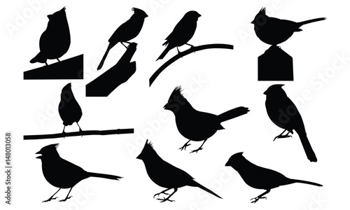 Photo  Cardinal Silhouette vector illustration