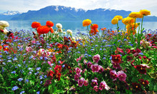 Colorful Flowers With Lake And Mountains On Background