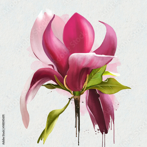 Foto op Plexiglas Magnolia Magnolia, one of the oldest genera of flowering plants. Magnolia flower - ancient as the world and elegant in its simplicity.