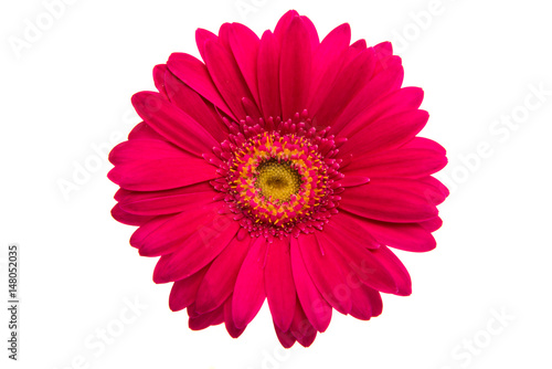 Door stickers Gerbera Beautiful gerbera flower