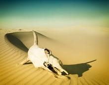 Desert Skull, Sand Desert