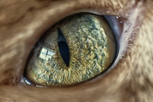 Close Up Of Green Cat's Eye