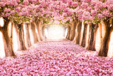 Fototapeta Kwiaty - Falling petal over the romantic tunnel of pink flower trees / Romantic Blossom tree over nature background in Spring season / flowers Background