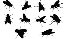 Fly Silhouette Vector Illustra...