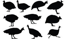 Guinea Fowl Silhouette Vector ...