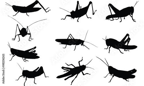 Canvas Print Grasshopper Silhouette vector illustration