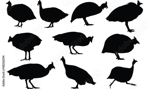 Fotografie, Tablou Guinea fowl Silhouette vector illustration