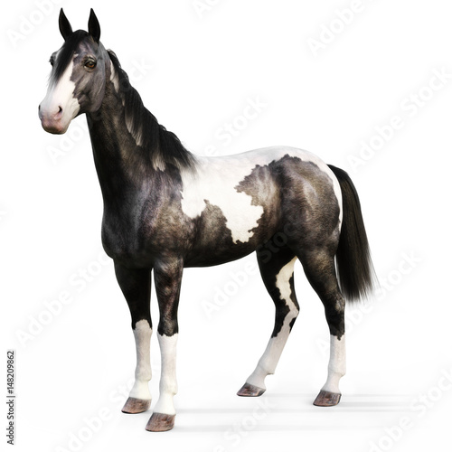 Fotografering  Gypsy Vanner horse on a white background. 3d rendering