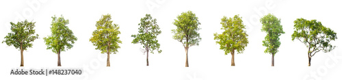 Fotografía  collections green tree isolated on white background.
