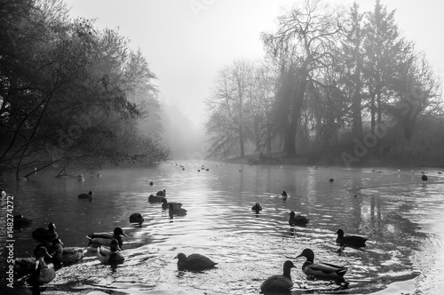 ducks-in-frozen-water-in-the-mist