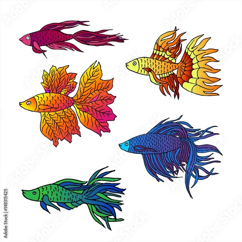 Set Of Beautiful Hand Drawn Aquarium Fish River Fish Sea Fish