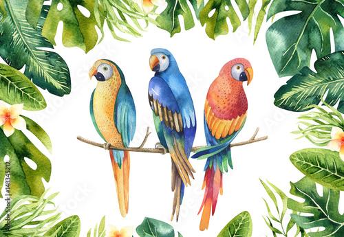 recznie-rysowane-akwarela-tropikalnych-roslin-zestaw-i-papuga-egzotyczny-pa