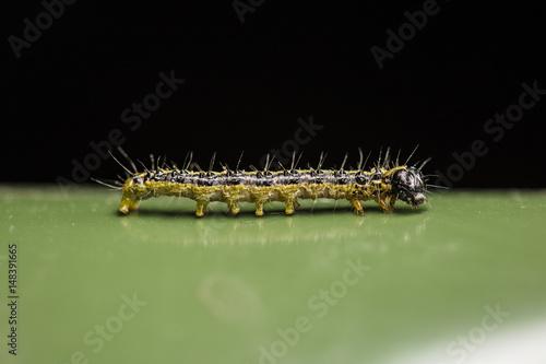 caterpillar worm on green
