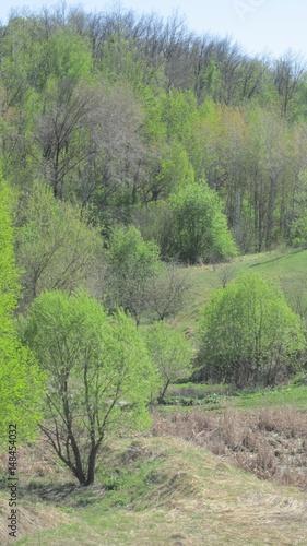 Fotobehang Olijf Весенний пейзаж, деревья и кустарник на склоне холма