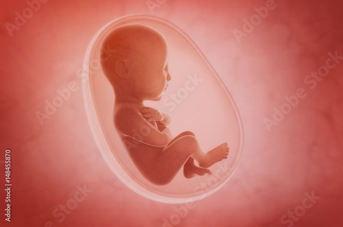 Fotografie, Obraz  fetus inside the womb