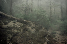 Ghostly Looking Forest, With Dense Fog And Humidity Giving A Sense Of Isolation And Creepiness