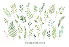 Hand Drawn Watercolor Illustrations. Botanical Clipart ( Leaves, Flowers, Swirls, Herbs, Branches). Floral Design Elements. Perfect For Wedding Invitations, Greeting Cards, Blogs, Posters And More