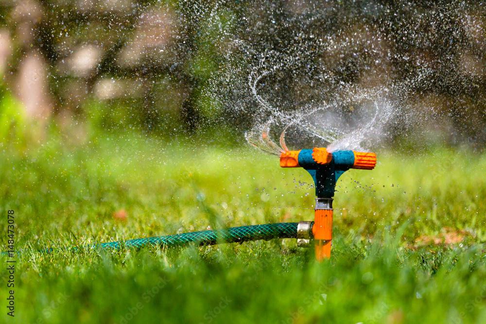 Fototapety, obrazy: Garden sprinkler watering grass