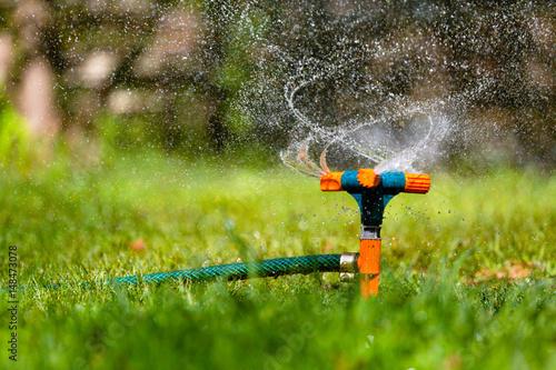 Obraz Garden sprinkler watering grass - fototapety do salonu