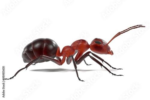 realistic 3d render of ant Wallpaper Mural