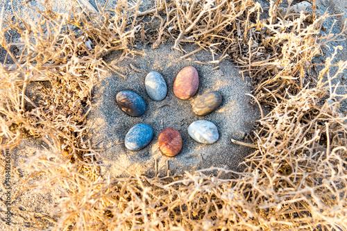 Fotografia, Obraz  Ein Vogelnest mit Steineiern