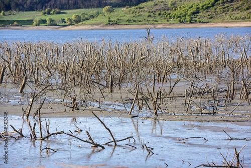 Photo Estuary of small river, mud and sediment