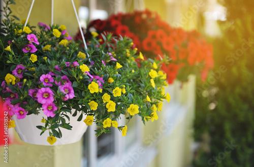 Fotografía  Baskets of hanging petunia flowers on balcony