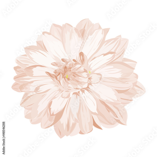 Carta da parati hand drawn graphic dahlia lower for background, texture, wrapper pattern,
