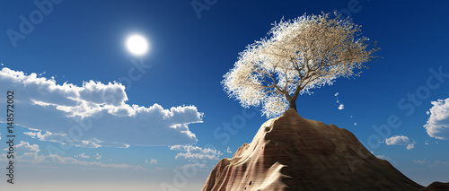 Photo almond trees